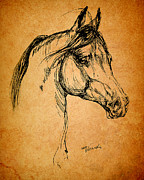Arabian Horses Prints - Horse Drawing Print by Angel  Tarantella