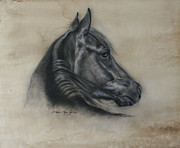 "\\\""texas Artist\\\\\\\"" Drawings Framed Prints - Horse Drawing I Framed Print by Omar Garza"