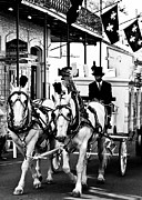 Horse Photos Framed Prints - Horse Drawn Funeral Carriage Framed Print by Kathleen K Parker