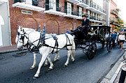 Quarter Horses Framed Prints - Horse Drawn Hearse Framed Print by Bourbon  Street