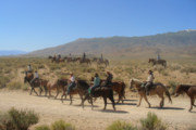 Hills Photos - Horse Drive from June Lake to Bishop California by Christine Till