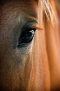 Equine Prints - Horse Eye Print by Adam Romanowicz