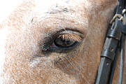 Bridle Metal Prints - Horse Eye Metal Print by Jennifer Lyon
