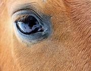 Lashes Framed Prints - Horse Eye Framed Print by Odd Jeppesen