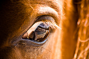 Jeramie Curtice - Horse Eye Reflection of...