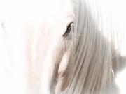 Horse Glow Print by Toni Thomas
