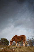 Grazing Art - Horse Grazing On Route by Eneko Garcia Ureta - Fotografía