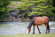 Riverbank Prints - Horse Grazing Print by Thanks for choosing my photos.
