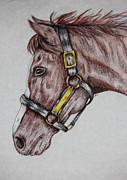 Color Pencil Drawings - Horse Head 1 by Sheri LaBarr