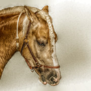 Horse Head Digital Art - Horse Head Portrait by Randy Steele