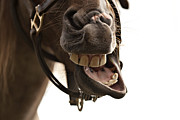 Talking Metal Prints - Horse Humour Metal Print by Heather Swan