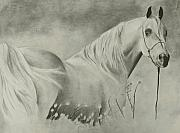 Wild Horse Drawings - Horse in a Field by Michael Trujillo