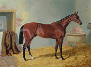 Racehorse Paintings - Horse in a Stable by John Frederick Herring Snr