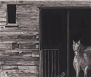 Rural Scenes Drawings Acrylic Prints - Horse In Barn Acrylic Print by Bryan Baumeister
