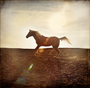 Earth Tone Posters - Horse in Landscape 1 Poster by David Orndorf