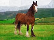 Clydesdale Posters - Horse in the Field Poster by Deborah MacQuarrie