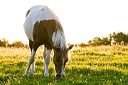 Mare Photo Originals - Horse in the morning light by Christophe ROLLAND