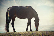 Kazakhstan Prints - Horse In Wild Print by Arman Zhenikeyev - professional photographer from Kazakhstan