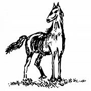 Ink Drawing Prints - Horse Print by Karl Addison