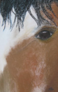 Horses Pastels Framed Prints - Horse Looking at You Framed Print by Jan Rooney