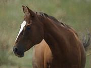 Horse Painterly Print by Ernie Echols