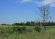 Prairies Prints - Horse pasture on the plains Print by Jim Sauchyn
