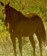 Grazing Horse Digital Art Posters - Horse Patch Poster by Debra     Vatalaro