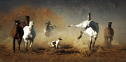 Running Photo Acrylic Prints - Horse Play Acrylic Print by Heather Swan