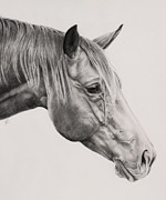 Stable Drawings - Horse Portrait 1 by Patrick Entenmann