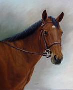 Lisa  Ober - Horse Portrait in Pastel