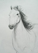 Horse Drawings Framed Prints - Horse Framed Print by Ryan Seate