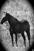Pastureland Prints - Horse Scope Print by Debra     Vatalaro