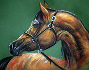 Horse Drawing Framed Prints - Horse Soft Pastel Framed Print by Angel  Tarantella