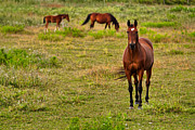 Grazing Horse Posters - Horse With No Name Poster by Matt Dobson