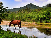 Tayrona Prints - Horse With No Name Print by Skip Hunt