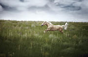 Side View Metal Prints - Horsepower Metal Print by Arman Zhenikeyev - professional photographer from Kazakhstan