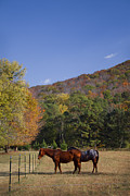 Reds Of Autumn Photo Posters - Horses and Autumn Landscape Poster by Kathy Clark