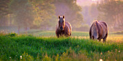 Pa State Parks Photos - Horses at sunset  by Emmanuel Panagiotakis