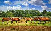 Feeding Metal Prints - Horses at the ranch Metal Print by Elena Elisseeva