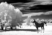 Surreal Framed Prints Framed Prints - Horses Black White Surreal Nature Landscape Framed Print by Kathy Fornal
