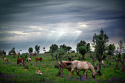 Cloudy Day Prints - Horses Eating Print by Carlos Caetano