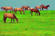 Puerto Rico Digital Art - Horses Graze by Seaside by Thomas R Fletcher