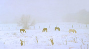 Snow-covered Landscape Mixed Media Prints - Horses Grazing in a Field of Snow and Fog Print by Steve Ohlsen
