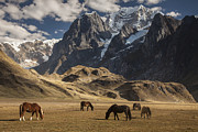 Mountain Prints - Horses Grazing Under Siula Grande Print by Colin Monteath