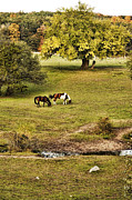 Horse Pasture Prints - Horses Print by HD Connelly