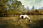 Feeding Photographs Prints - Horses In The Meadow Print by Kathy Jennings