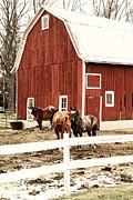 Joel Witmeyer - Horses