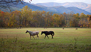 Gatlinburg Tennessee Photo Prints - Horses Print by Lena Auxier