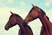 Horses Looking Sideways Print by Tracey Barrow Photography