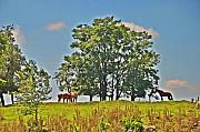 Amish Prints - Horses on a Hill Print by Bill Cannon